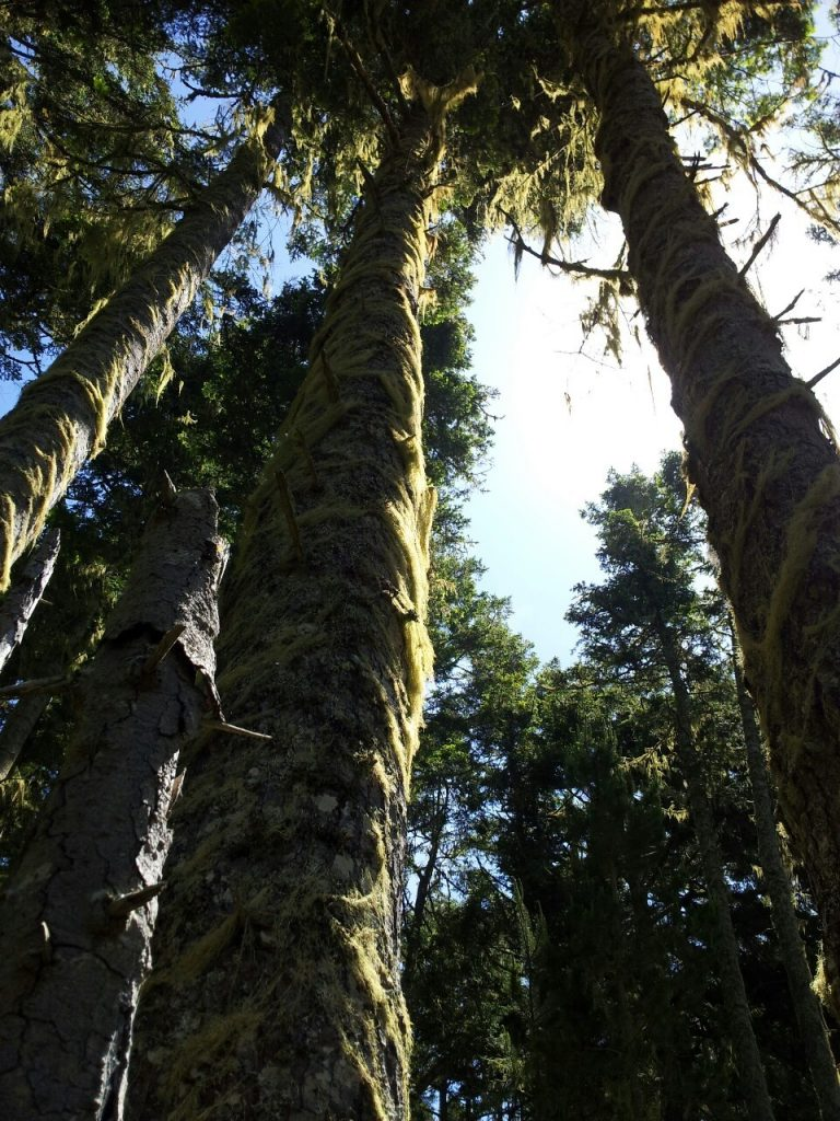 fuzzy parallel. East Sooke Trail, BC. May2013